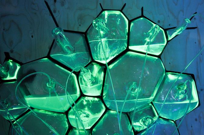 Mikrobiologiczny dom przyszłości