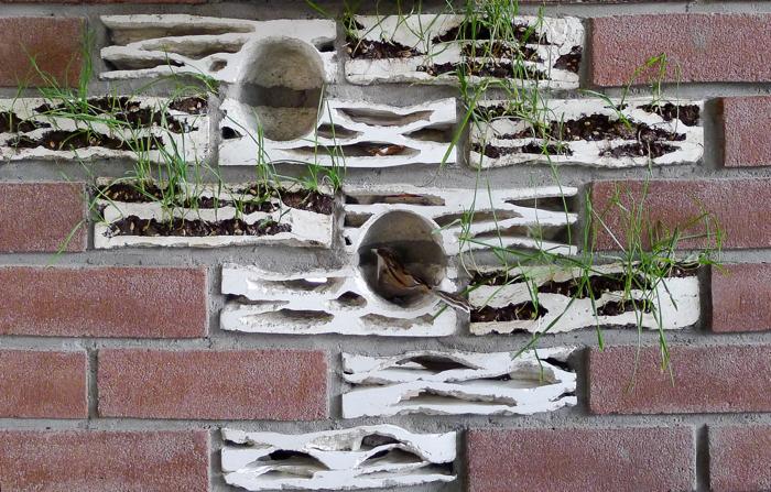 Gdy wróbel mieszka w cegle