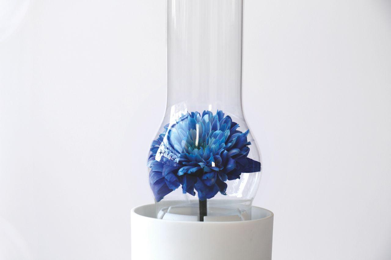 Lampa naftowa w roli wazonu [zdjęcia]
