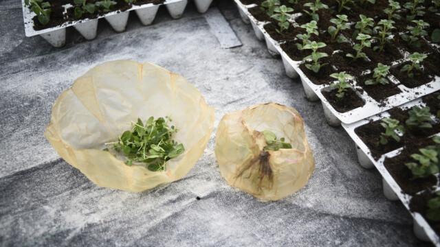 Unia wprowadza zakaz produktów plastikowych. SCOBY to alternatywa!