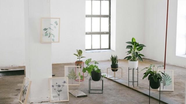Minimalistyczna kolekcja od Elementuj. Z miłości do roślin!