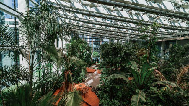 Tropikalny ogród w sercu największego centrum biznesowego w Polsce