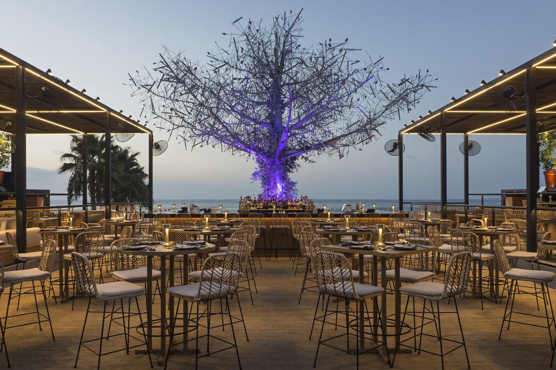 Drzewo Życia w Libanie. Za jego powstanie odpowiadała polska projektantka